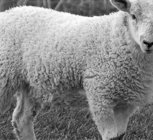 merino uld er til både sommer og vinter